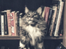 Cat books thumbnail